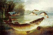 Henry Leonidas Rolfe - A Kingfisher and a Pike Capturing Perch
