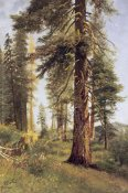 Albert Bierstadt - California Redwoods