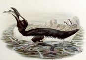 John Gould - Great Auk