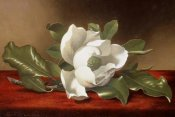 Martin Johnson Heade - Magnolia