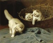 Arthur Heyer - White Angora Kittens With a Beetle