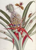 J Mulder - Pineapple (Ananas) With Surinam Insects