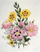 Sir Edward Burne-Jones - Yellow and Pink Mixed Flowers. Cistus