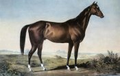 Currier and Ives - Celebrated Horse