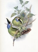 John Gould - Blue-Throated Groove-Bill (Toucan)