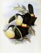 John Gould - Citron-Brested Toucan