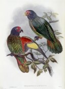 John Gould - Red-Fronted Lory