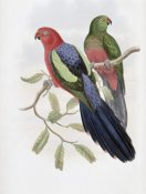 John Gould - Yellow-Winged King Parrot