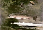 Winslow Homer - Trout