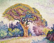 Paul Signac - Pine Tree In St. Tropez