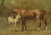 Samuel Sidney - Thoroughbred Mare and Foal, 1900