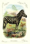Unknown - The Zebra, 1900