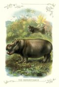 Unknown - The Hippopotamus, 1900