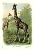 Unknown - The Giraffe, 1900