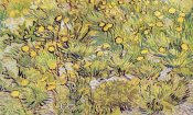 Vincent Van Gogh - Field Of Yellow Flowers