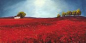 Philip Bloom - Field of Poppies