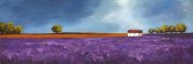 Philip Bloom - Field of Lavender