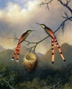 Martin Johnson Heade - Two Hummingbirds With Their Young