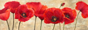 Cynthia Ann - Red Poppies