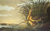 John James Audubon - Long-Billed Curlew