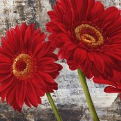 Jenny Thomlinson - Red Gerberas I