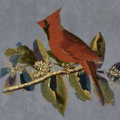 BG.Studio - Audubon Decor - Male Cardinal Grosbeak Detail