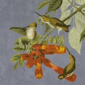 BG.Studio - Audubon Decor - Humming Bird Detail