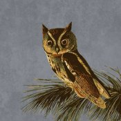 BG.Studio - Audubon Decor - Little Screech Owl Detail