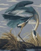 BG.Studio - Audubon Decor - Great Blue Heron