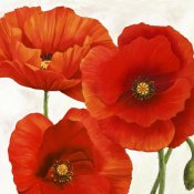 Luca Villa - Poppies I