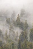 Matthias Breiter - Mist in Tongass National Forest, Juneau, Alaska