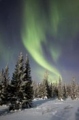 Matthias Breiter - Northern lights over boreal forest, North America