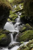 Matthias Breiter - Cascading creek in temperate rainforest interior, Sitka, Alaska