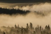 Matthias Breiter - Morning fog near Swan Lake along the Alaska Highway, Yukon, Canada