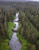 Matthias Breiter - Stream and boreal forest, Tongass National Forest, Yakutat, Alaska