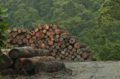 Murray Cooper - Logging of native rainforest, Ecuador