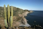 Tui De Roy - Giant Cardon cactus, Santa Catalina Island, Sea of Cortez, Baja California, Mexico