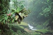 Tui De Roy - Bromeliads growing along stream in Bocaina National Park, Atlantic Forest, Brazil