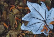 Gerry Ellis - Cecropia leaf atop lobster claw petals on tropical rainforest floor, Mesoamerica