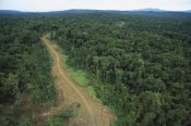 Gerry Ellis - Logging road in lowland tropical rainforest, Kikori Basin, Papua New Guinea