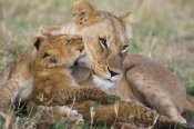 Suzi Eszterhas - African Lion mother and young cubs, Masai Mara National Reserve, Kenya