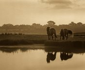 Tim Fitzharris - Wild Horse pair grazing at Assateague Island National Seashore, Maryland