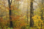 Tim Fitzharris - Mixed deciduous forest in autumn, Mill Brook, Vermont
