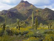 Tim Fitzharris - Saguaro and Teddybear Cholla amid flowering Lupine and California Brittlebush