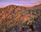 Tim Fitzharris - Panther and Safford Peaks covered with Saguaro and Teddybear Cholla, Saguaro National Park, Arizona