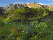 Tim Fitzharris - Wildflower meadow looking towards Mount Sneffels Wilderness, Yankee Boy Basin, Colorado
