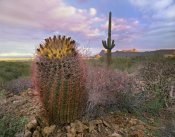 Tim Fitzharris - Saguaro and Giant Barrel Cactus, Saguaro National Park, Arizona