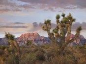 Tim Fitzharris - Joshua Tree and Spring Mountains, Red Rock Canyon National Conservation Area, Nevada
