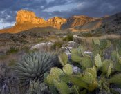 Tim Fitzharris - Opuntia cactus and Agave, Guadalupe Mountains National Park, Chihuahuan Desert, Texas