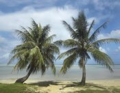 Tim Fitzharris - Palm trees, Agana Beach, Guam